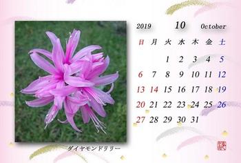 '19.10月カレンダー(ダイヤモンドリリー).jpg
