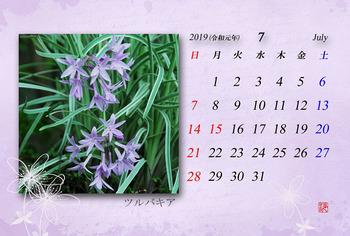 '19.7月カレンダー(ツルバキア).jpg