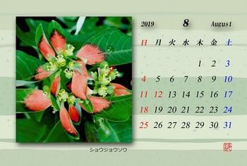 '19.8月カレンダー(ショウジョウソウ).jpg