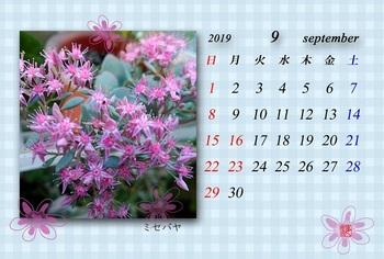 '19.9月カレンダー(ミセバヤ).jpg
