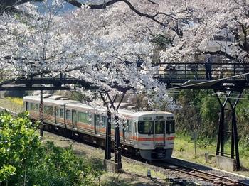 山北の桜.jpg