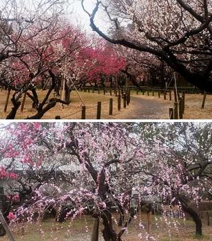 総合公園梅園.jpg